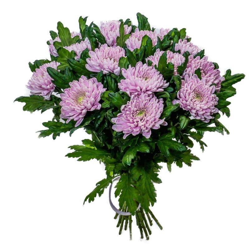 Хризантема 1головая цветная